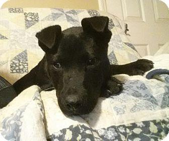 Adopt A Pet :: Simba  - Snow Hill, NC
