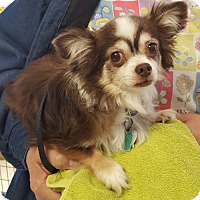 Adopt A Pet :: Charlie - Hollywood, MD
