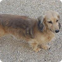 Adopt A Pet :: Bronson - Anaheim, CA