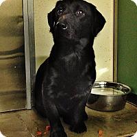 Adopt A Pet :: Crosby - Ottawa, KS