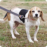 Adopt A Pet :: Dolly - Atlanta, GA