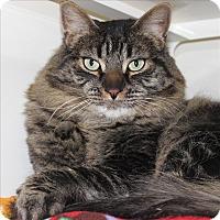 Adopt A Pet :: Minion (Max) - Duluth, MN