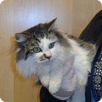 Adopt A Pet :: Kira - Wildomar, CA