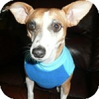 Adopt A Pet :: Betty - Houston, TX