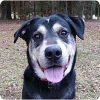 Adopt A Pet :: Bryson - Mocksville, NC