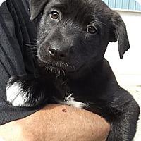 Adopt A Pet :: Erica Kane - Allentown, PA