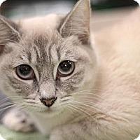Adopt A Pet :: Reina - Sacramento, CA