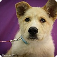 Adopt A Pet :: Moses - Broomfield, CO