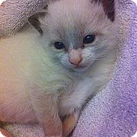 Adopt A Pet :: Freddie - Xenia, OH