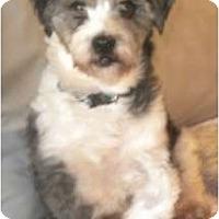 Adopt A Pet :: Jackson - Douglas, MA