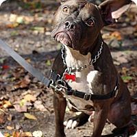 Adopt A Pet :: Santee - Tinton Falls, NJ