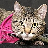 Adopt A Pet :: Buster - Kerrville, TX
