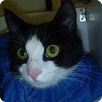 Adopt A Pet :: Tiny - Hamburg, NY
