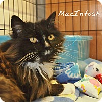 Adopt A Pet :: MacIntosh - Ocean City, NJ