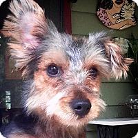Adopt A Pet :: Forrest - Gainesville, FL