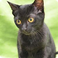 Adopt A Pet :: Ms. Joey151793 - Atlanta, GA