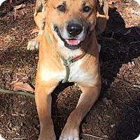 Adopt A Pet :: Buster - Harrisonburg, VA