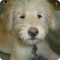 Adopt A Pet :: 'HONEYBUN' - Agoura Hills, CA