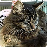 Adopt A Pet :: Genessee - Island Park, NY