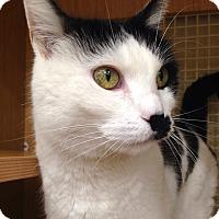 Adopt A Pet :: Reia - Addison, IL