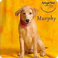Adopt A Pet :: Murphy - Topeka, KS