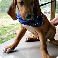 Adopt A Pet :: Harris - Kimberton, PA