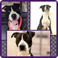 Adopt A Pet :: Pepper - Harrisburg, PA