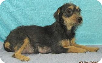 Terrier (Unknown Type, Medium) Mix Dog for adoption in Livingston, Texas - Daisy