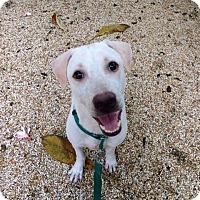 Adopt A Pet :: 'MAI' - Agoura Hills, CA