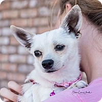 Adopt A Pet :: Clover - San Marcos, CA
