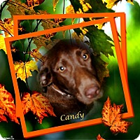 Adopt A Pet :: Candy - Crowley, LA