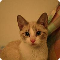Adopt A Pet :: Cyia - St. Paul, MN