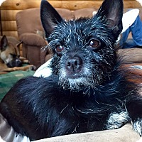 Terrier (Unknown Type, Small) Mix Dog for adoption in Morgantown, West Virginia - Laney