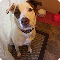 Adopt A Pet :: Laguna/Nala - Blue Bell, PA