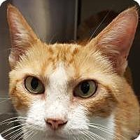 Adopt A Pet :: Trisha - Friendswood, TX