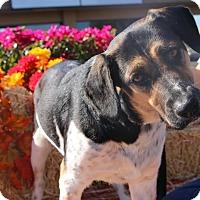 Adopt A Pet :: CORRIN - Phoenix, AZ
