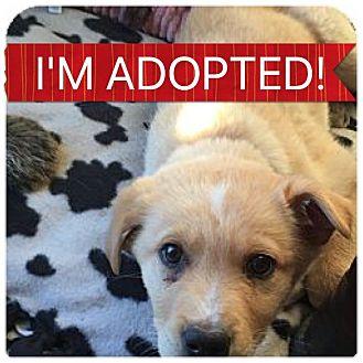 Labrador Retriever Mix Puppy for adoption in Regina, Saskatchewan - Link
