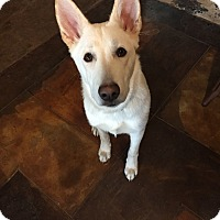 Adopt A Pet :: Layla - oklahoma city, OK