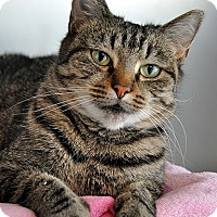 Adopt A Pet :: Lily - Fort Leavenworth, KS