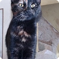 Adopt A Pet :: Screamer - Benton, PA
