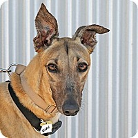 Adopt A Pet :: Glen - Santa Rosa, CA