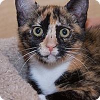 Adopt A Pet :: Cher - Irvine, CA