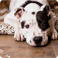 Adopt A Pet :: Twilight - Phoenix, AZ