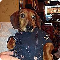 Adopt A Pet :: PIP - Portland, OR