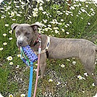 Adopt A Pet :: Marbles - Youngstown, OH