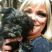 Adopt A Pet :: Baxter the Brussels - Scottsdale, AZ