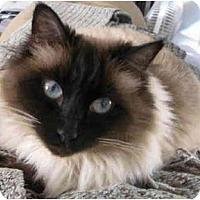 Adopt A Pet :: Zoey - Davis, CA