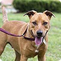 Adopt A Pet :: Spearmint - Gainesville, FL