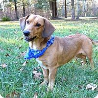 Adopt A Pet :: Milli - Mocksville, NC