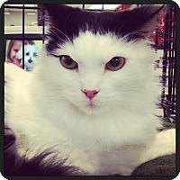 Adopt A Pet :: Mitzi - Great Mills, MD